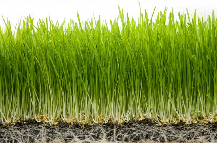 Fertilizer: Organic vs. Inorganic