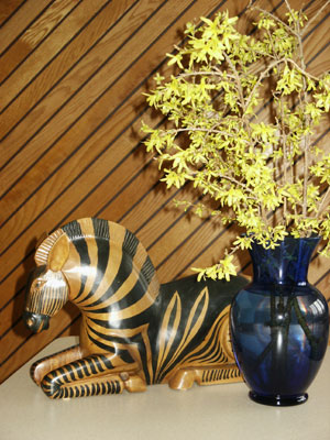 "During winter months forsythia stems can be cut, brought indoors and ""forced"" into blooming. (Photo © Hilda M. Morrill)"